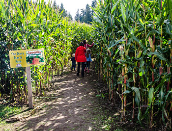Your family will love every visit to the country store and Bob's Corn Maze and Pumpkin Patch in Snohomish, Washington, just north east of Seattle.